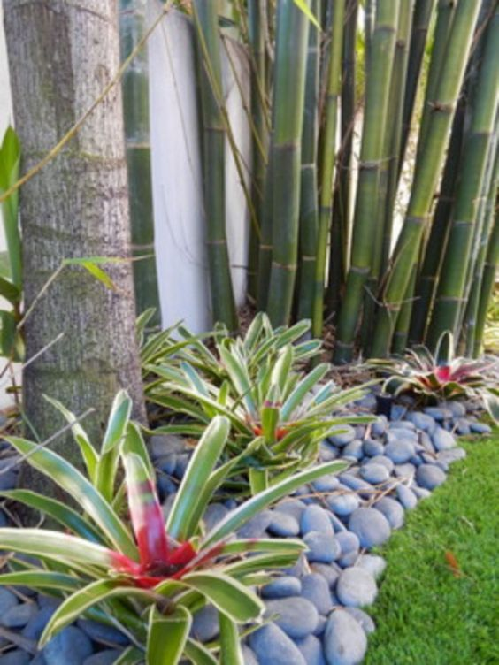 tropical backyard ideas 22