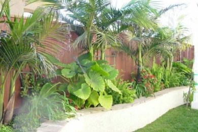 tropical backyard ideas feature