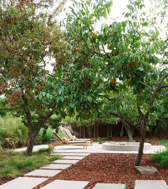 backyard trees ideas 1