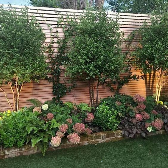 backyard trees ideas 9