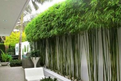 backyard trees ideas feature