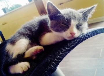 Photos_grey_kitten_sleeping