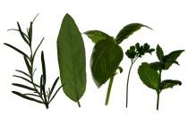 Fresh Herb Vinaigrette