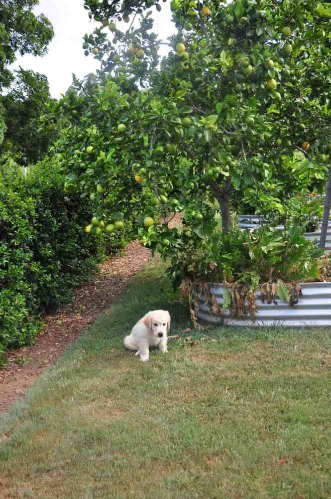cooper by the lemon tree as a baby
