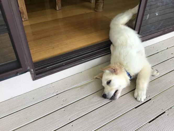 cooper collapsed in the doorway