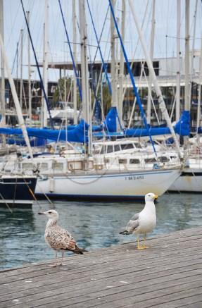 Mouettes devant des bateaux sur la jetée de Barceloneta à Barcelone
