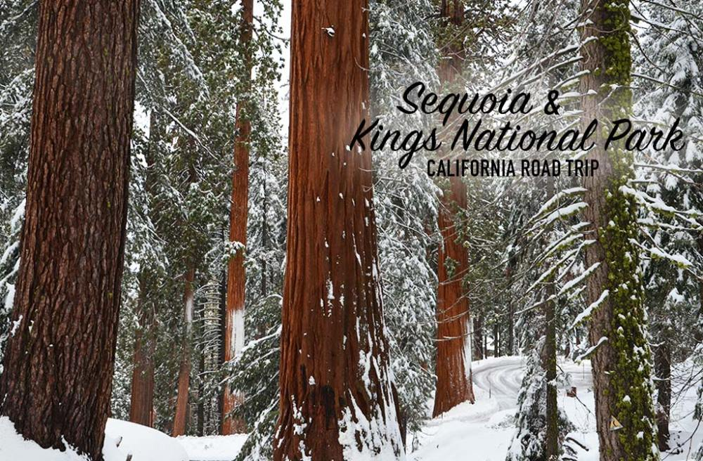 Sequoias sous la neige, Sequoia et Kings National Parks, USA