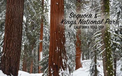 Sequoias sous la neige, Sequoia et Kings National Parks, USA