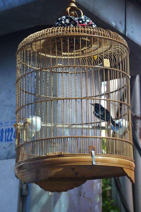 Oiseaux en cage, Saigon, Ho Chi Minh Ville, Vietnam