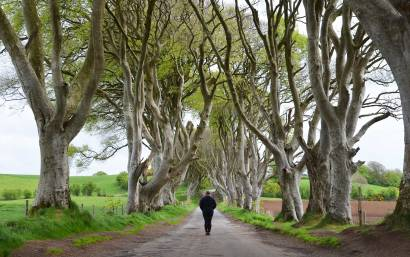 Couv, The Dark Hedges, Irlande du Nord