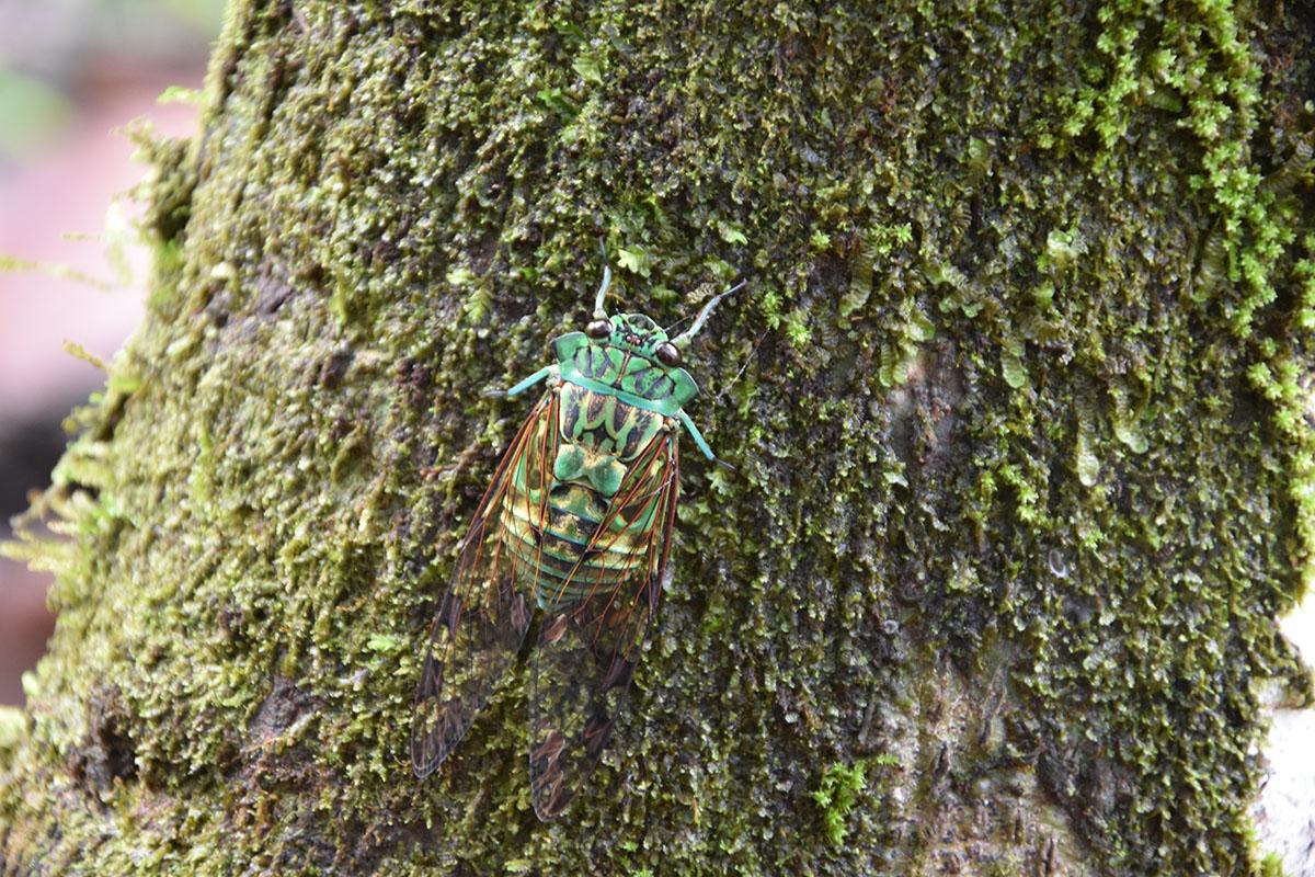 Scarabée vert sur un arbre au Costa Rica