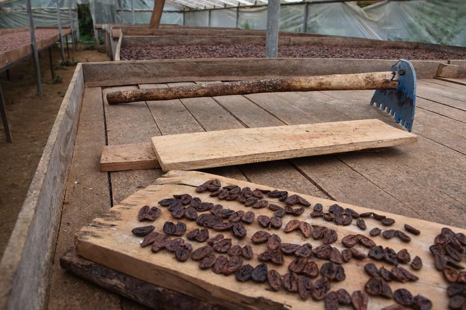 Fèves de cacao qui sèchent à la Finca La Amistad, Costa Rica