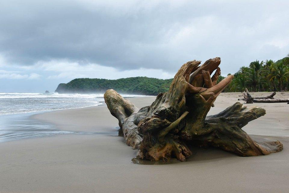 Bois flotté sur la plage, péninsule de Nicoya, Costa Rica