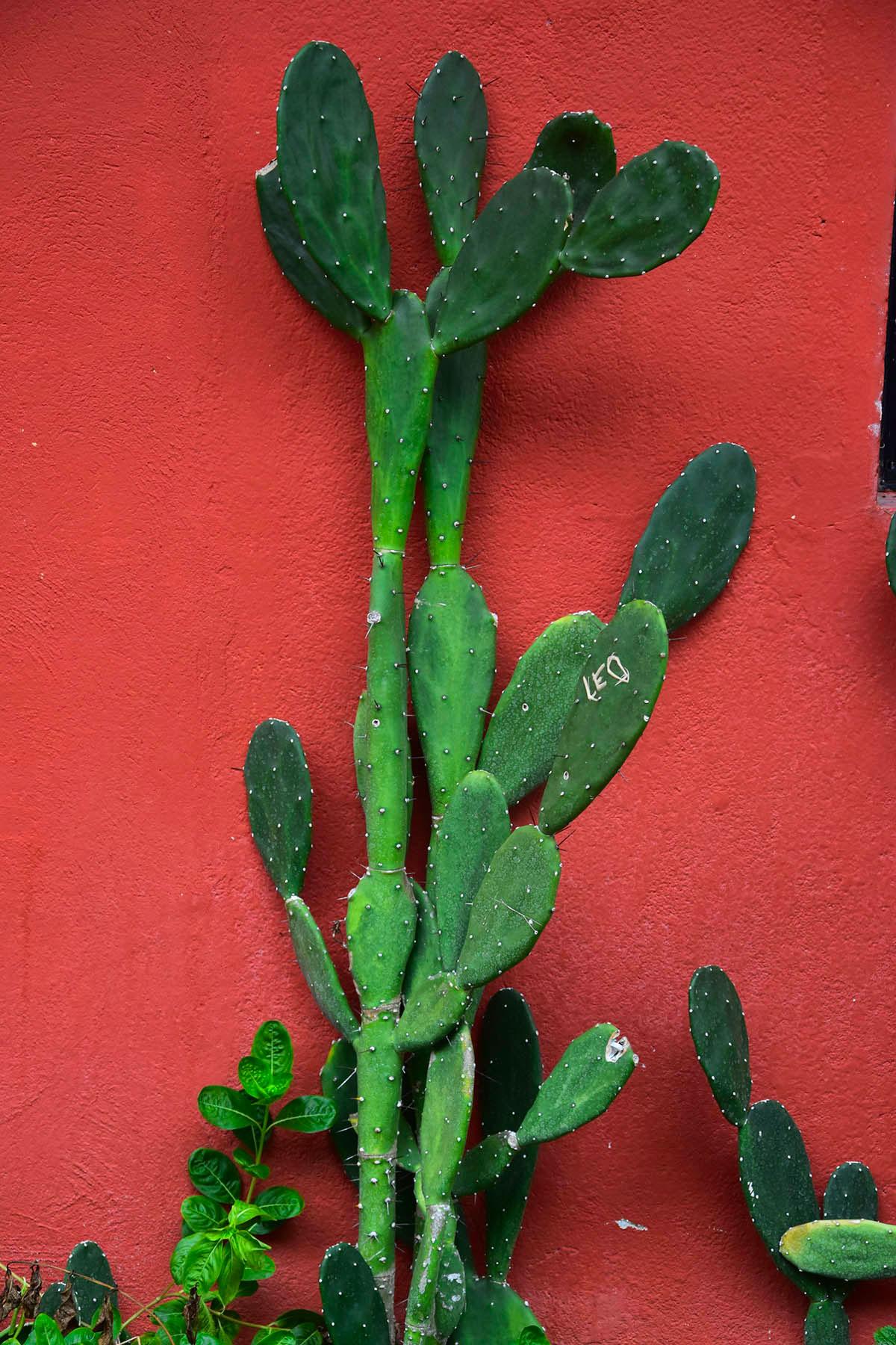 Cactus à Montezuma, Costa Rica