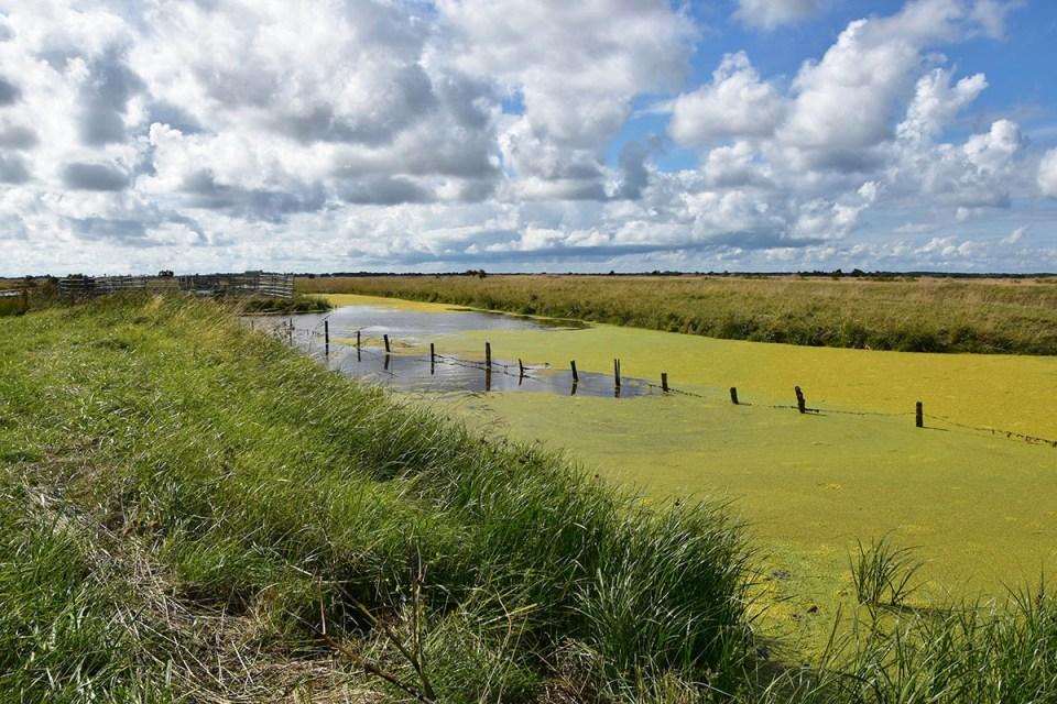 Vue sur les marais salants verts, Ile d'Oléron