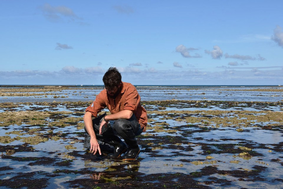 Zackary, notre guide nous montre les espèces qui vivent dans l'estran, Ile d'Oléron