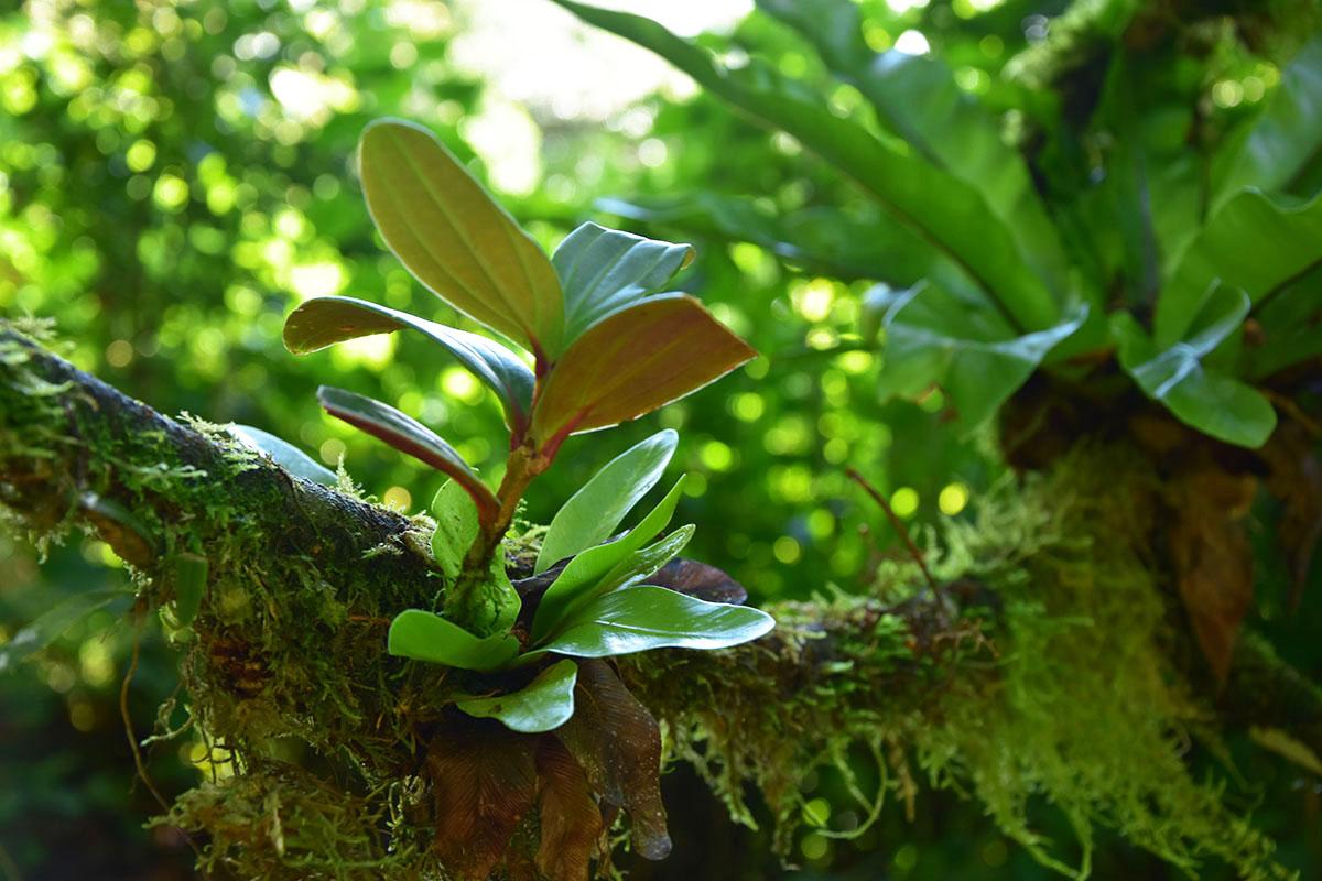 Une plante grasse pousse sur une souche d'arbre