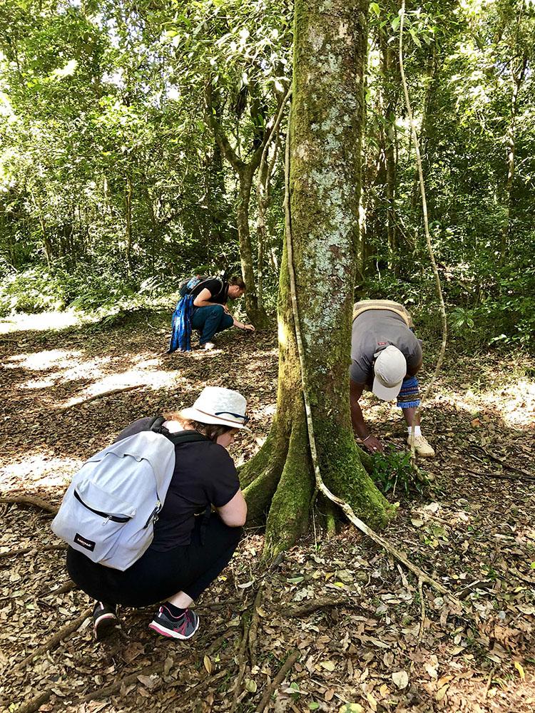 Marie-Catherine, Antonin et Flavie en pleine recherche du plus petit caméléon du Monde