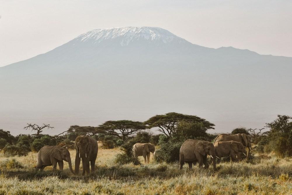 Éléphants au pied du Kilimandjaro dans le parc Amboseli Kenya