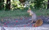 Munching on berries