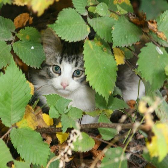 Осенний котенок