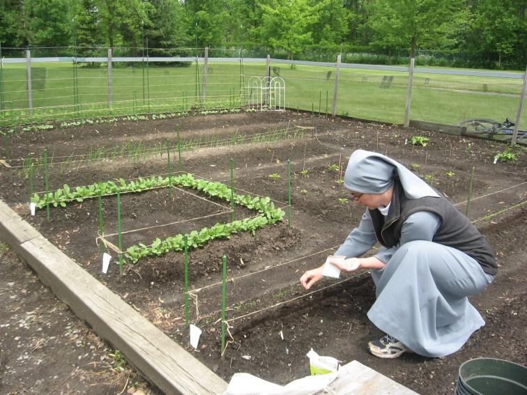 jardin semences