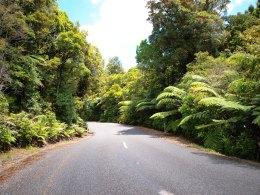 Straße zu Tane Mahuta - Nordinsel