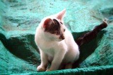 Die kleine Katze, die sich mit uns die Zeit vertrieb.