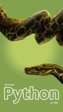 Burmese Python as Pets