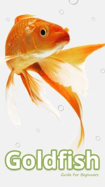 Goldfish Guide For Beginners