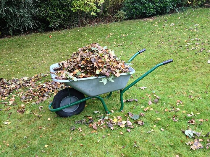 Autumn Lawn Care