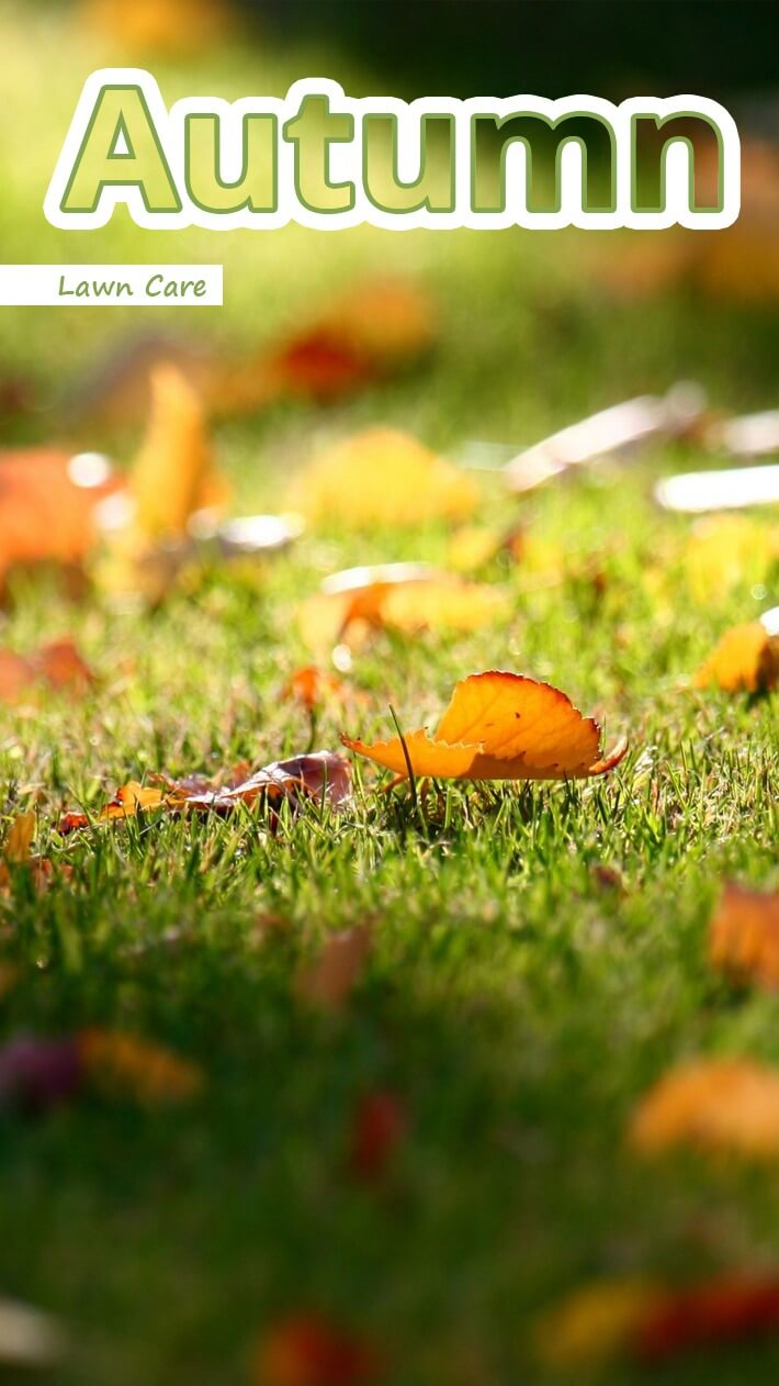 Recommended Tips Autumn Lawn Care Recommended Tips