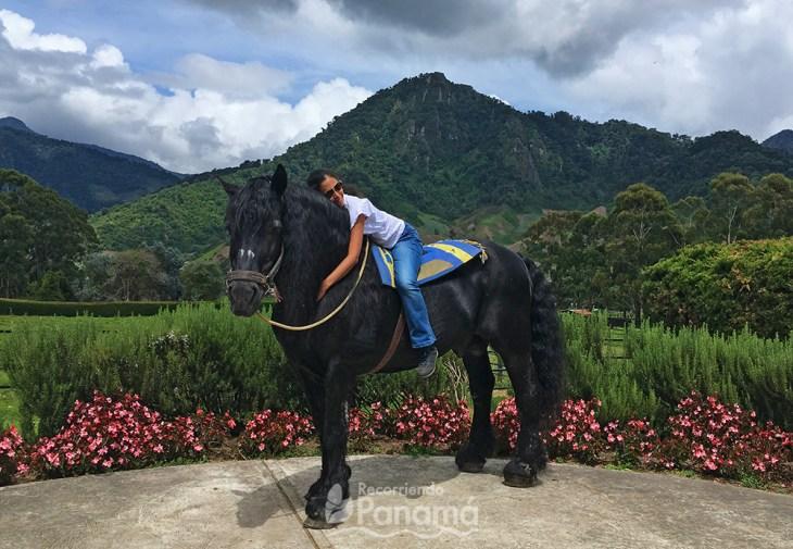 Centurion, the photogenic Percheron Horse. hara of cerro punta