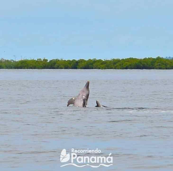 Bahia de los delfines