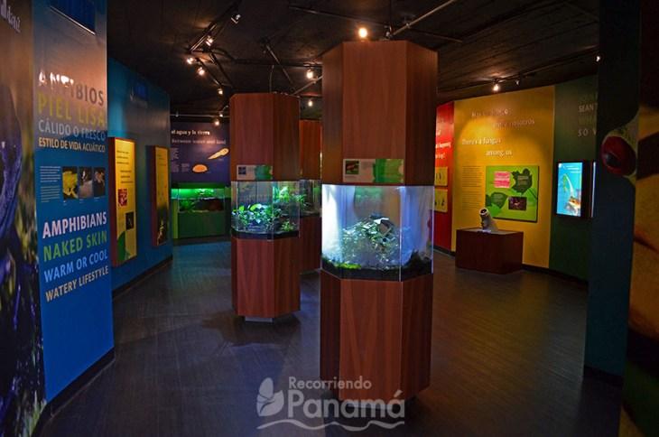 Exhibición de Ranas en el Centro Natural Punta Culebra.