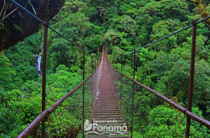 Hanging bridges one of the Recommended Trips for 2020