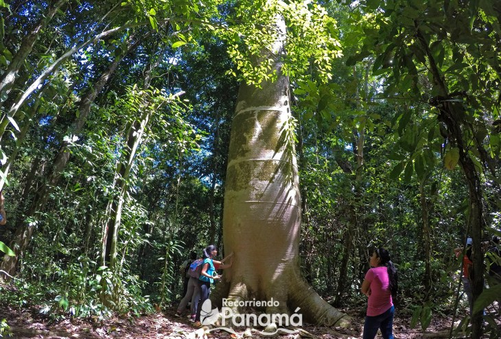 Barro Colorado Island Recommended Trips for 2019