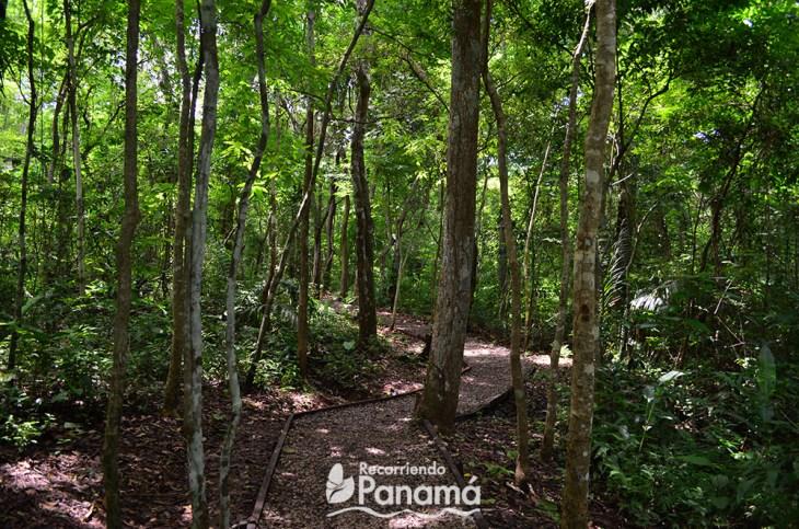 Bosque tropical húmedo