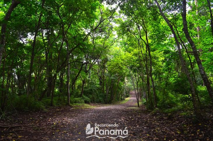 Parque Metropolitano de Panamá.