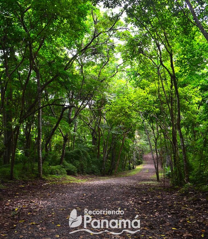 Parque Metropolitano de Panamá