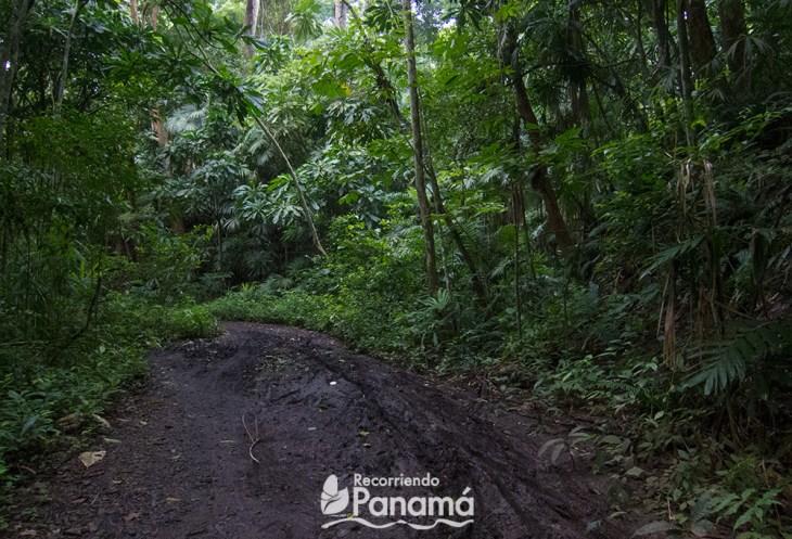 Parte fea del sendero de plantación