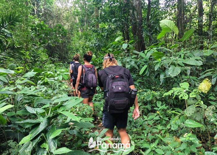 Caminado en la selva hacia la Cascada Jaguar