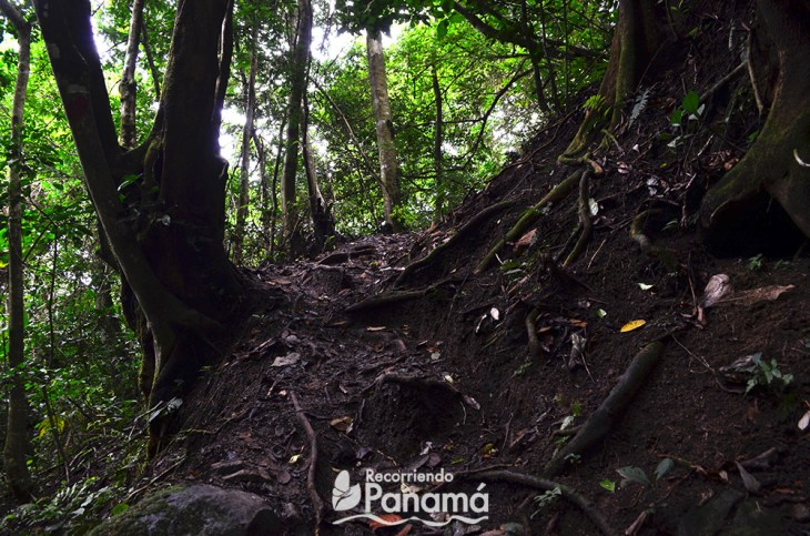 In some parts of the trail, the roots of the trees make stairs that help us to go up