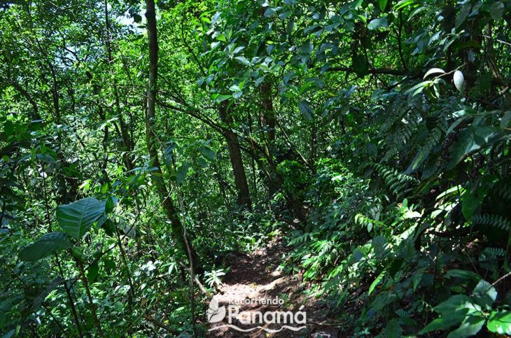 Trinidad Hill trail