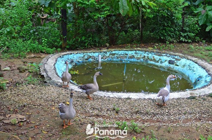 Geese. Agro tourism la Granja Campo y Aventura