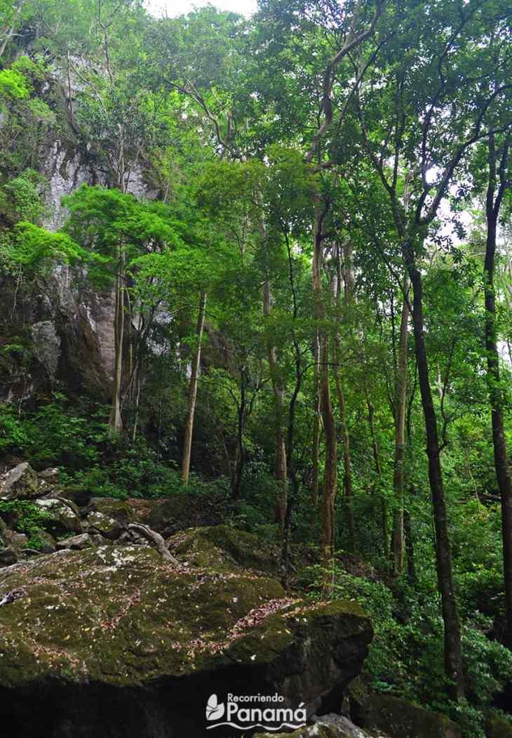 Árboles en la Cascada Saca Lágrimas.