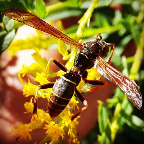 My Photography Wasp