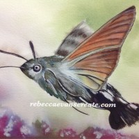 10#worldwatercolormonth- hummingbird trend brusho alternative experiment