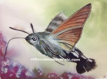 Hummingbird hawk moth, using dylon dye to paint with, like brusho A4 140 lb cold press