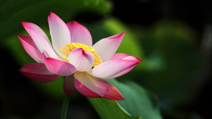 shallow focus photo of pink and white petaled flower